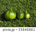 トマト 33646861