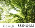 木 緑 緑色の写真 33648488