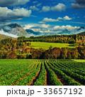ノルウェー いちご イチゴの写真 33657192