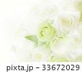 背景 花 白のイラスト 33672029