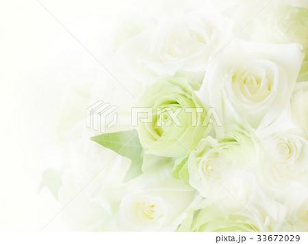 背景-バラ-白 33672029