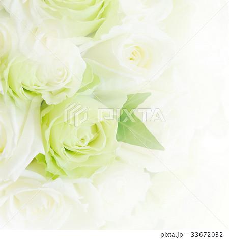 背景-バラ-白 33672032