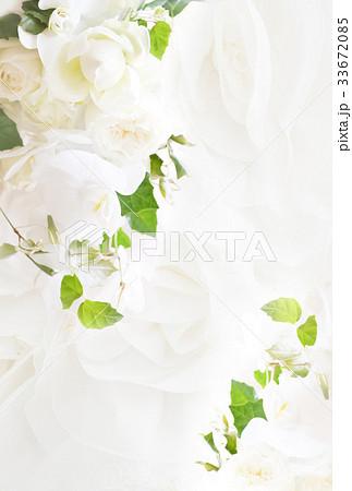 背景-バラ-白 33672085