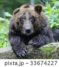 33674227