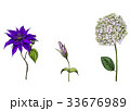 花 芽 蕾のイラスト 33676989