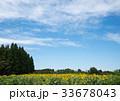 向日葵と空と 33678043