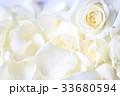 バラ 白 花の写真 33680594