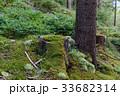 樹木 樹 ツリーの写真 33682314