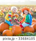かぼちゃ カボチャ 南瓜の写真 33684105