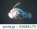 チョウチンアンコウ 33686170
