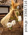 牡丹 寒牡丹 花の写真 33687316