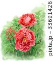 牡丹 花 植物のイラスト 33691426