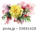 牡丹 花 植物のイラスト 33691428