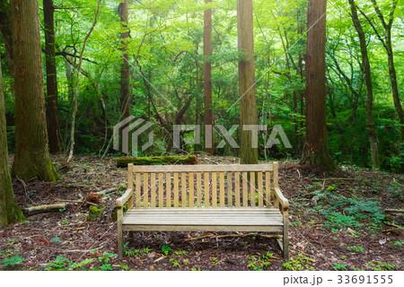 森の中のベンチ 33691555