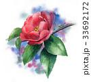 花 サザンカ 山茶花のイラスト 33692172