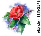花 サザンカ 植物のイラスト 33692173