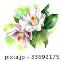 花 サザンカ 斑入りのイラスト 33692175