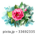 椿 花 植物のイラスト 33692335