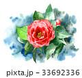 椿 花 植物のイラスト 33692336