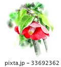 椿 花 植物のイラスト 33692362