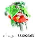椿 花 植物のイラスト 33692363