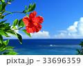 沖縄 海 ハイビスカスの写真 33696359