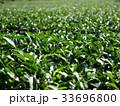茶畑 33696800