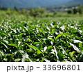 茶畑 33696801