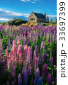 Church of the Good Shepherd and Lupine Field 33697399