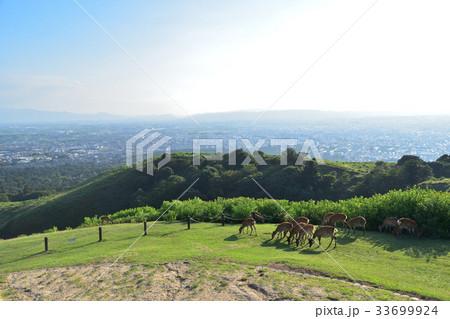 奈良若草山山頂の鹿の群れと奈良市街 33699924