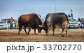 雄牛 争う 喧嘩の写真 33702770