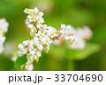 そばの花 33704690
