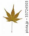 葉 枯れ葉 落ち葉の写真 33724503