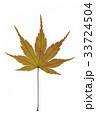 葉 枯れ葉 落ち葉の写真 33724504