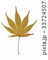 葉 枯れ葉 落ち葉の写真 33724507
