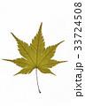 葉 枯れ葉 落ち葉の写真 33724508