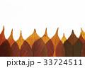 紅葉した葉 33724511
