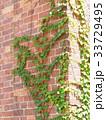 赤レンガ 壁 レンガの写真 33729495