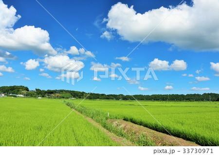 夏の青空 新緑の田園風景 33730971