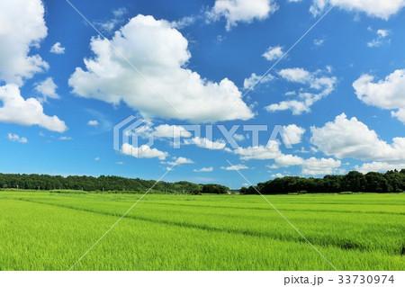 夏の青空 綺麗な田園風景 33730974