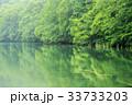 水鏡 霧 蔦沼の写真 33733203