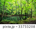 水鏡 蔦沼 ブナ林の写真 33733208