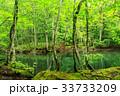 水鏡 蔦沼 ブナ林の写真 33733209