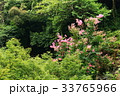 箕面国定公園 33765966