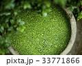 ウキクサ 緑 緑色の写真 33771866
