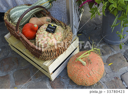 Pumpkins and various kinds of courgettesの写真素材 [33780423] - PIXTA