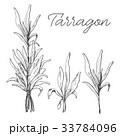タラゴン 白背景 切り抜きのイラスト 33784096