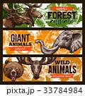 動物 ワイルド 野生のイラスト 33784984