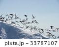 鳥 アイスバーグ 氷山の写真 33787107