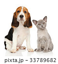 Puppy and kitten together 33789682